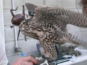 Desplegando las alas sin obstáculos