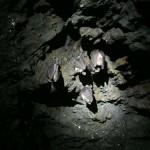 Hibernación de rinólofos mayores en minas