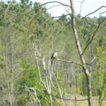 Aves del Sur