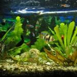 Micronaturaleza IV: Microorganismos de un acuario