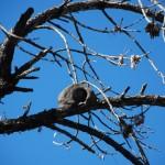 Un nido singular