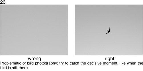 Regla 26, fotografiar el pájaro