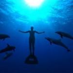 The Cove: documental sobre la matanza de delfines en Taiji
