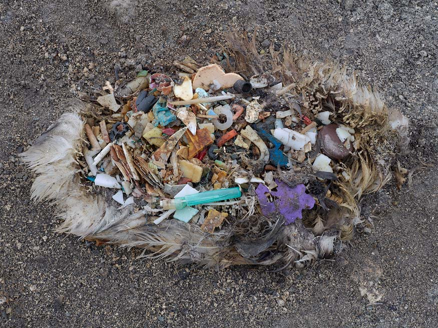 albatros_chick_plastic_death2