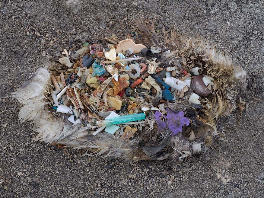 albatros_chick_plastic_death2