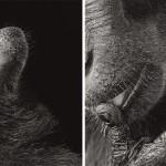 Tim Flach animales que posan mejor que modelos.