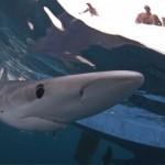 Antena 3 acompaña a Gonzalo a la pesca y marcaje de tiburón azul