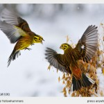 Fergus Gill, premio a mejor fotografía del mundo de naturaleza-categoría juvenil