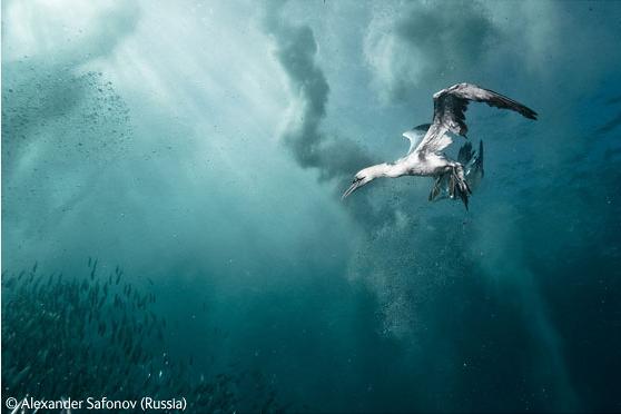 wildlife-fotografia-3