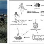 Acuicultura III – Cultivo de moluscos