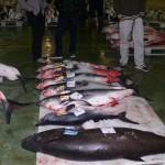 Matamos tiburones, matamos el mundo