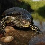 Anfibios y reptiles de Portugal por Vasco Flores