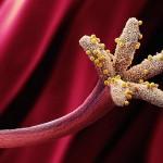 Microfotografías de granos de polen