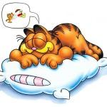 ¿Duermen los animales?