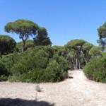 El Pinar de la Algaida en Doñana