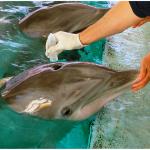 Ecología Azul el nuevo blog de ecología marina
