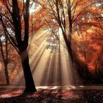 Fotografiando el otoño