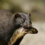 La gestión de las especies invasoras: Introducción