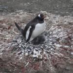 La maldición de los pingüinos