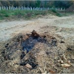 El nematodo del pino: una oportunidad para nuestro monte? (II)