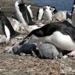 Rumbo a la Antártida (II)