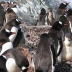 Pingüinos los príncipes del hemisferio sur