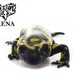 "Salamandra salamandra ""White Series"""