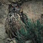 El búho real: el conde de la noche (I)
