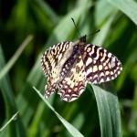 Criaturas aladas: Las Mariposas