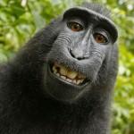 Y los mejores fotógrafos: unos monos