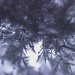 Viendo la formación de un árbol de hielo bajo el microscopio