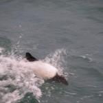 Historias del krill y las ballenas