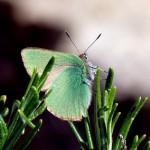 Criaturas aladas III: Las mariposas