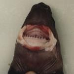El ataque del tiburón cigarro