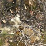 Asesinos de Lobos en el Barbanza (XV): el cementerio de perros