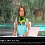 Asesinos de Lobos en el Barbanza (X): La Sexta Noticias