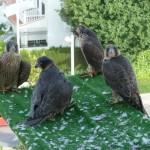 """2ª Edición del proyecto """"Reintroducción del halcón peregrino en la ciudad de Granada"""" (I)"""