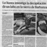 Asesinos de lobos en el Barbanza (XXI): Lobos decapitados