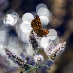 Criaturas aladas VI: Pinceladas del río Segura