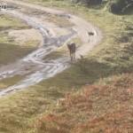 Los lobos en Galicia 2012: selección del lugar de cría de Miguel Mosquera