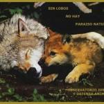 Asesinos de Lobos en el Barbanza (XXX): Las matanzas también llegan a los Parques Nacionales