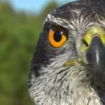 Fauna 43-37, la nueva webserie de AXENA