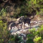 """Asesinos de Lobos en el Barbanza: """"A Lobagueira"""""""