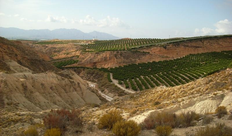 La actividad agrícola predomina en el entorno de rambla salada.