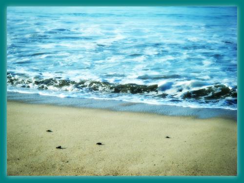 Tortuga Golfina