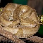 Isla de Queimada Grande: El Reino de la Serpiente
