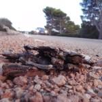 Tortugas mediterráneas en el corredor de la muerte