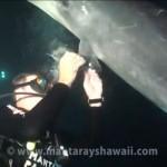 Un delfín que pide ayuda