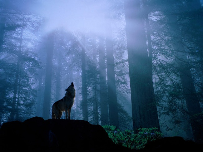 Las montañas del lobo