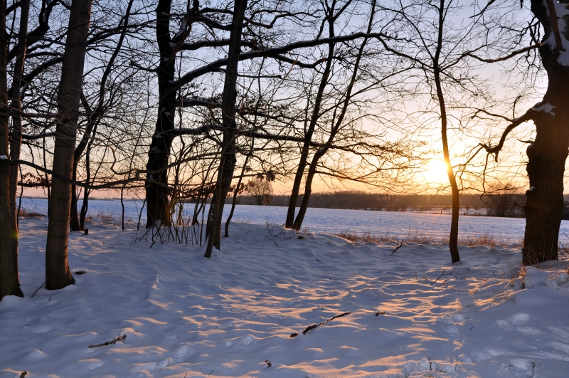 Campiña nevada de Golm